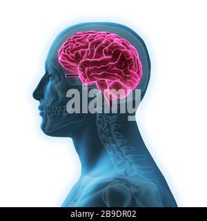 Seitenansicht des Menschen mit glühendem rotem Gehirn und Schädel, auf weißem Hintergrund. - Stockfoto