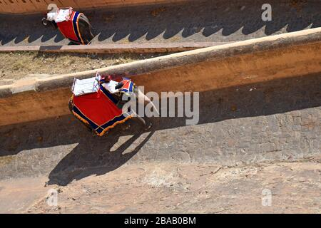 Elefanten, die Touristen nach Amber Fort, Jaipur, Rajasthan, Indien bringen - Stockfoto