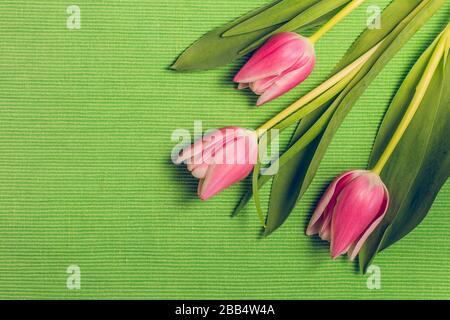 Drei frische rosafarbene Tulpenblumen mit Blättern auf grünem Tischtuch mit Textur, Kopierraum, flachem Layout Federschmuck in Pastellfarben.