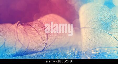 Transparentes Blatt auf einem pink-blauen Bokeh-Hintergrund, abstraktes schönes Makro, Rand. Selektiver Softfokus