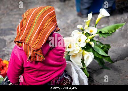 Eine Frau verkauft Calla-Lilien auf dem Markt Chichicastenango, Guatemala. - Stockfoto