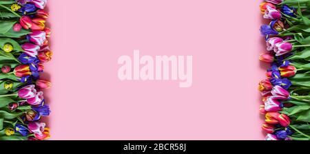 Oster-Grenze mit Frühlingsblumen und bunten Wachteleiern auf pinkfarbenem Hintergrund. Banner. Kopierbereich, Draufsicht, flaches Layout. Stockfoto