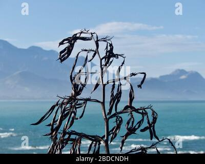 Leinenpflanzen (wharariki/Harakeke) Samenschoten mit den Seaward Kaikoura Ranges im Hintergrund