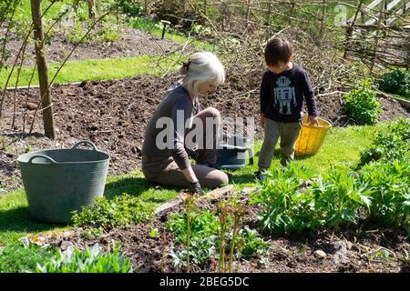Großmutter Frau und Junge Kind Enkelkind Gartenarbeit im Frühling Sonnenschein in einem Landgarten in Carmarthenshire Wales UK April 2020 KATHY DEWITT - Stockfoto