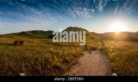 Eindrucksvolles Beispiel für die Verwandlung Wüste in Savanne im Süden Israels. Die Weizenspitzen im Vordergrund sind nur Unkraut