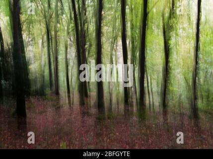 Abstraktes Bewegungsunschärfefoto von Bäumen auf Forest of Dean, Wye Valley, England Wales