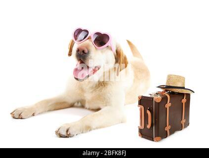Lustige Hundetourist mit Sonnenbrille, Koffer und Hut, isoliert auf weiß - Stockfoto