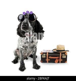 Lustige Hundetourist mit Koffer, Sonnenbrille und Hut, isoliert auf weiß - Stockfoto
