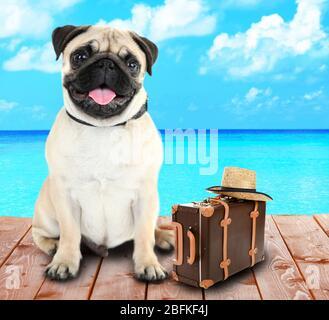 Lustige Hund Tourist mit Koffer und Hut in der Nähe von Meer - Stockfoto