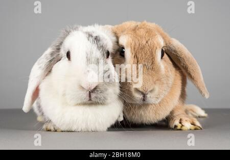 Bunny Pals, Großbritannien. - Stockfoto