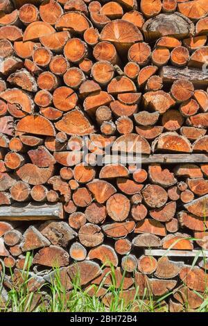 Brennholz gesägt und für den Winter bereit gestapelt. - Stockfoto