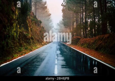 Lange Weg Straße in den Berg mit Waldbäumen Wald herum und Nebel oder Wolken am Ende wie Nebel Schlechtes Wetter - Regen auf dem Asphalt und schmutzigen Boden - Winter Herbst Klima - Reise und Ziel