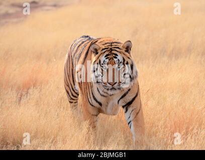Südafrikanische Outdoor-Fotos von Friedrich von Horsten. Stockfoto