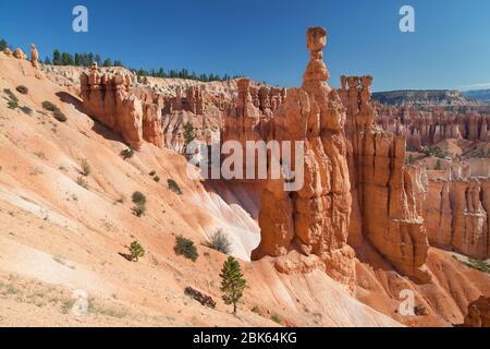 Thor's Hammer im Bryce Canyon National Park, Utah, USA. - Stockfoto