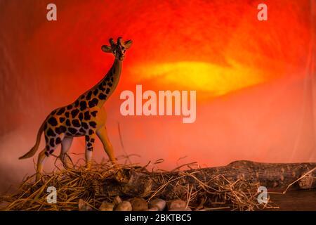 Eine Giraffe im Schatten eines dramatischen Sonnenuntergangs - Stockfoto