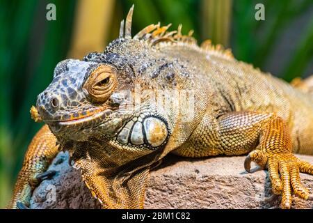 Ein Bild eines bunten Leguans, der auf einem Stück Holz sitzt und die Sonne nimmt