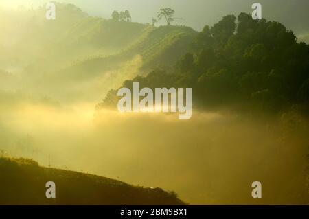 Neblige Bergrücken und Täler in einem Wiederaufforstungsgebiet nahe der südlichen Grenze des Mount Gede Pangrango National Park, West Java, Indonesien. - Stockfoto
