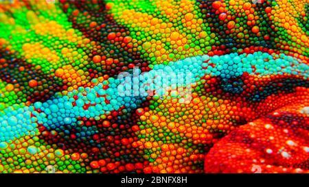 Panther Chamäleon Haut Nahaufnahme. Dies ist ein Ambilobe Gebietsschema, und zeigt erstaunliche grün, gelb, rot, orange, blau und weiß