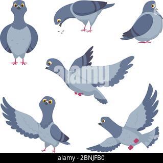 Cartoon Satz von lustigen Tauben. Illustrationen von Vögeln - Stockfoto