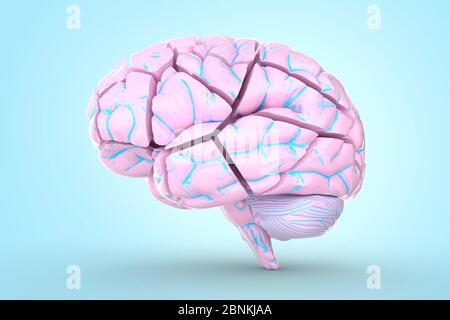 Zerschmettertes Gehirn. Konzeptionelle 3d-Illustration hilfreich bei der Visualisierung von Gehirnerkrankungen. - Stockfoto