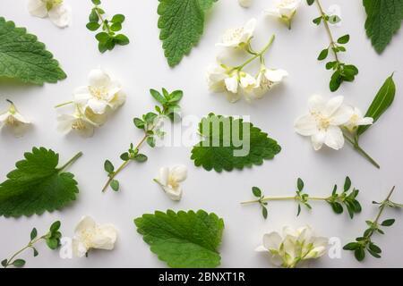 Kreatives florales Layout aus grünen melissa-Blättern, Thymian-Zweigen und Jasminblüten. Draufsicht. Flaches Lay. Floraler Kräuterhintergrund