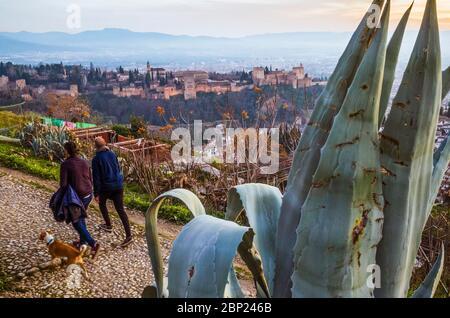 Granada, Spanien - 17. Januar 2020: Zwei junge Männer mit Hund spazieren am Aussichtspunkt San Miguel Alto mit dem Alhambra-Palast im Hintergrund. - Stockfoto