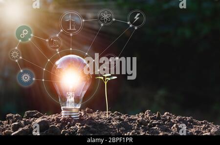 Energiesparende Glühbirnen und Baum auf Natur Hintergrund für Energie und kreative Konzept. - Stockfoto