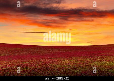Schöner Sonnenuntergang über dem roten Kleeblatt. - Stockfoto