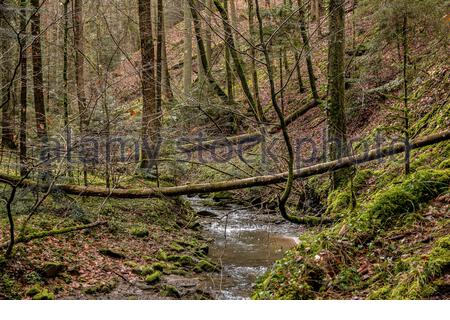 Kleiner Bach runter im Canyon inmitten des grünen Waldes - Stockfoto