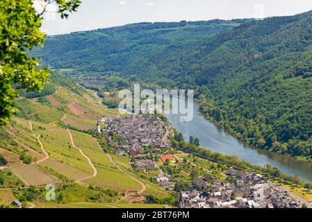 Schöne, reifende Weinberge in der Frühjahrssaison im Westen Deutschlands fließt die Mosel zwischen den Hügeln. Im Hintergrund des blauen Himmels und