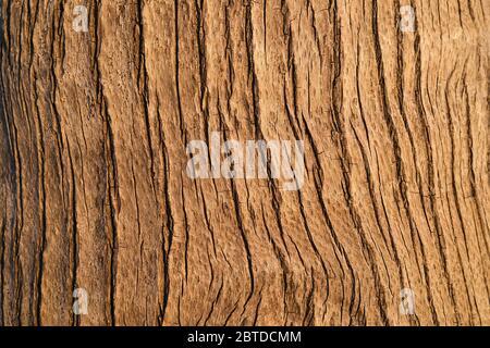 Die rissige und strukturierte Rinde eines Palmenstammes.