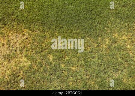 Draufsicht der hellen Rasen Garten Idee Konzept für die Herstellung von grünen Hintergrund verwendet, Rasen für die Ausbildung Fußballplatz, Gras Golfplätze grünen Rasen Muster t