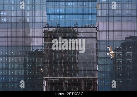 Bunte Reflexionen auf blauem Glasgebäude mit Möwe