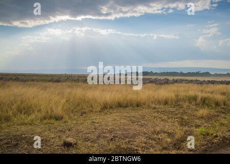 Afrikanische Gnus und Zebras in Masai Mara Landschaft - Stockfoto