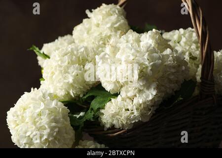Korbkorb mit Hortensien. Frühlingswerk - Stockfoto
