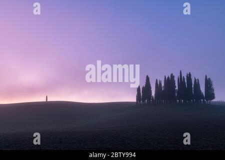 Pinien mit einem einzigen Baum mit Nebel, San Quirico d'Orcia, Val d'Orcia, UNESCO-Weltkulturerbe, Toskana, Italien, Europa - Stockfoto