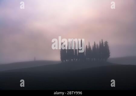 Pinien im Morgennebel, San Quirico d'Orcia, Val d'Orcia, UNESCO-Weltkulturerbe, Toskana, Italien, Europa - Stockfoto