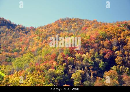 Herbstansicht in den Smokey Mountains. - Stockfoto