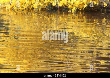Gold und grüne Reflexe im Teich