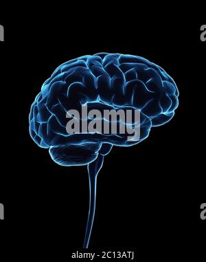 Zentrales Nervensystem. Gehirn und Rückenmark mit Clipping-Pfad enthalten. Konzeptionelle 3D-Darstellung des Gehirns.