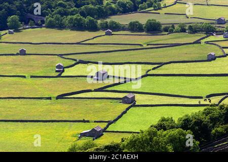 Trockenmauern und Scheunen in Swaledale, Gunnerside, Yorkshire Dales National Park, North Yorkshire, England, Vereinigtes Königreich, Europa