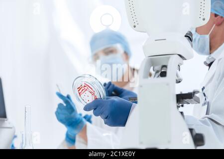 Wissenschaftlerin, die in einem biologischen Labor forscht. - Stockfoto