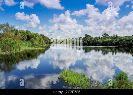 Wild Prairie Creek in Deer Prairie Creek bewahren in Venice Florida