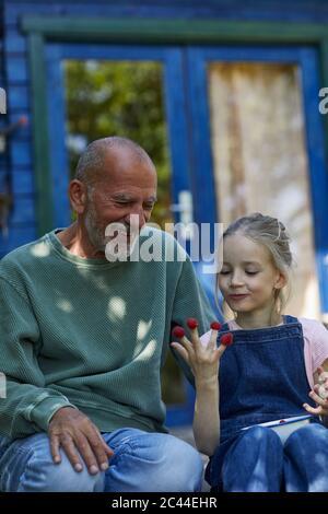 Großvater und Enkelin mit Himbeeren auf den Fingerspitzen im Garten - Stockfoto