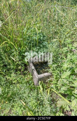 Alte Farm Wasserwanne verlassen und von Unkraut in einem Corne von Abfall landwirtschaftlichen Boden überwuchert. Metapher Unkraut, außer Kontrolle, Vernachlässigung, überwältigt.