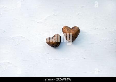 Zwei rohe Kartoffeln. Kartoffeln wie ein Herz. Zwei rohe Kartoffeln auf dem weißen Holzhintergrund. Kartoffeln wie ein Herz. Ökologie Liebe Konzept. Frische Speisen - Stockfoto