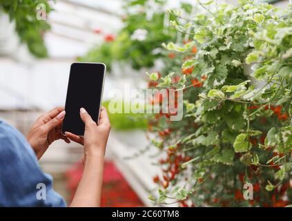 Mit dem Smartphone im Gewächshaus arbeiten. afroamerikanische Mädchen hält Smartphone und macht Foto von Blumen - Stockfoto