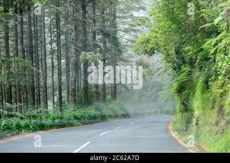 Eine schöne ländliche Asphaltstraße, die sich in den Wolken verirrt, hat sich tief im grünen Bergwald der Insel Madeira, Portugal, verirrt - Stockfoto