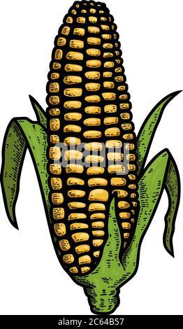Illustration der Ähre von Mais in Gravur Stil. Gestaltungselement für Logo, Etikett, Schild, Emblem, Plakat. Vektorgrafik - Stockfoto
