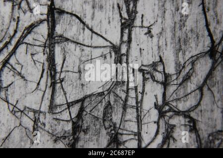 Feine 70er Jahre Vintage schwarz-weiß Lifestyle-Fotografie von einem natürlichen Muster in eine abstrakte Idee und Idee verwandelt.